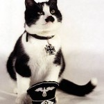 Cute cat with the iron cross